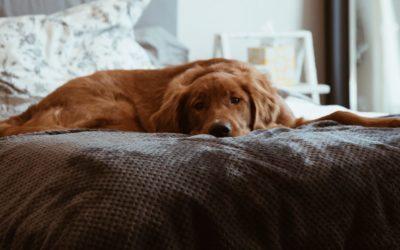 ¿Si pudieras cambiarías algunos comportamientos de tu Perro?